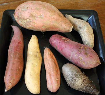 "From top: Camote (sweet potato), Purple ""ube"" Asian Yam, Sweet Asian Yam,"