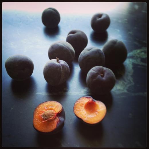 Black Velvet Apricots | ZoeBakes